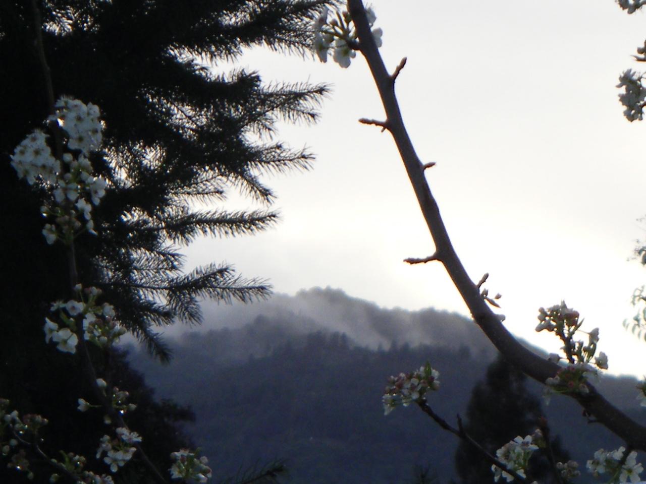 http://blog.writch.com/pear_fog.jpg